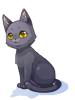 의상 검은고양이 이미지