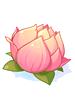 탐스러운 연꽃 이미지