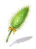 새싹 강아지풀 지팡이 이미지