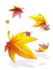 의상 흩날리는 낙엽 이미지