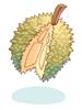 가시열매 이미지