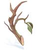 평범한 나뭇가지 이미지
