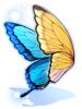의상 큰보라 제비나비의 날개 이미지